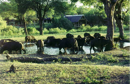 South Afroca Watering Hole