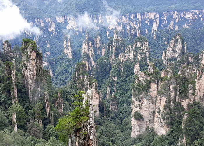 Hunan World Heritage quartzite-sandstone forest