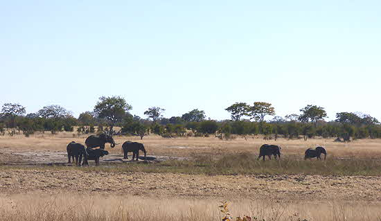 Somalisa Waterhole with Elephants