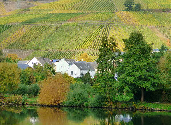 Mosel Vineyards Vertical Rows