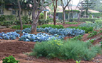 Soukaya Vegetable Garden